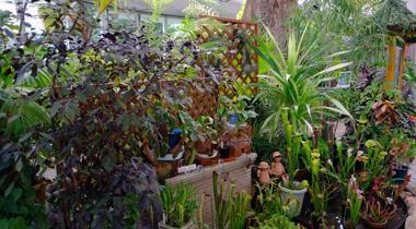 食虫植物のふやし方